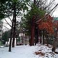 20101217/家附近社區一角