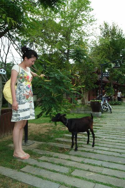 Tina很好心的幫小羊拉低樹枝