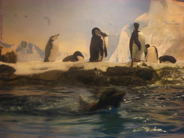 企鵝有活力的, 真希望我也能醬