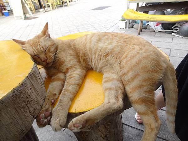 看到很慵懶的貓