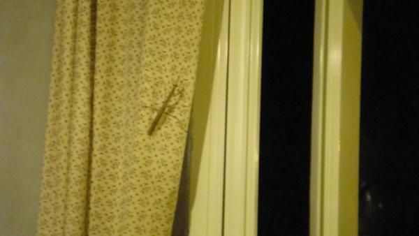 結果我們遇到螳螂,知識+說,看到螳螂代表祖先來看你了