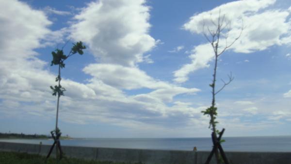 看到了白雲
