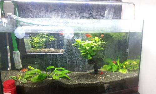 fish1021022