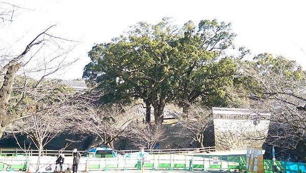 日本九州20170212_440.jpg