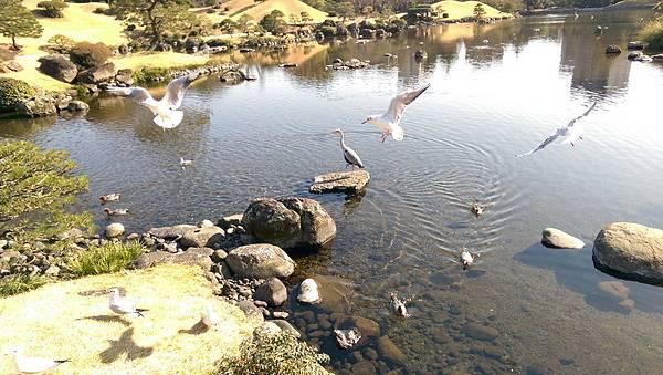 日本九州20170212_502.jpg