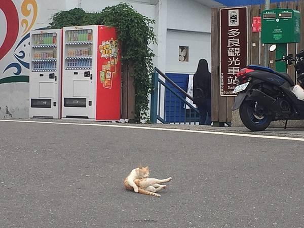 台東旅遊20170902_170904_0079.jpg