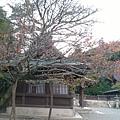 岡山倉敷20181028_181102_0239_調整大小.jpg