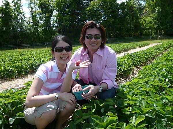 去年的夏天,我們去採草莓.JPG