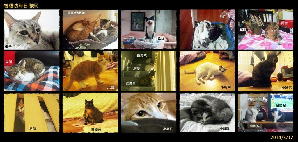 catspppp.jpg