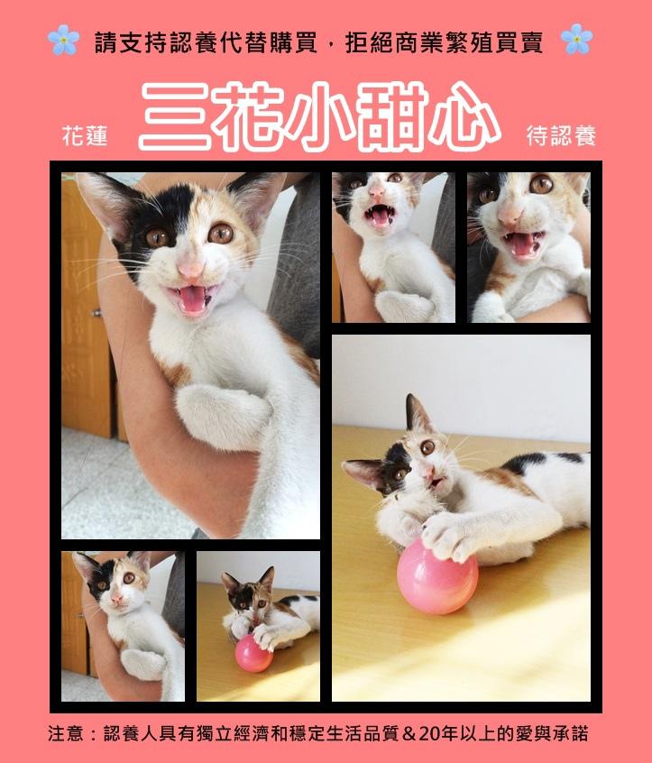cats 3 flower