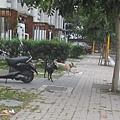 IMG_6855
