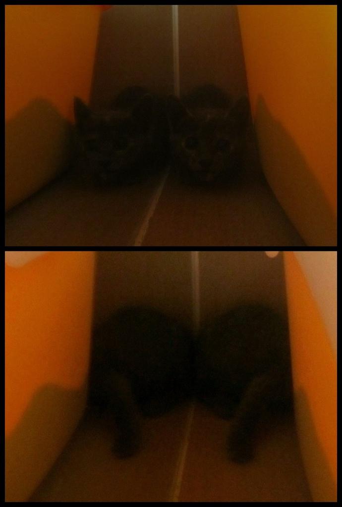 cats 小灰喵