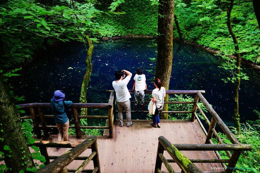 秋田 世界遺產白神山地十二湖的青池 卡瓦納 京都自由滯在