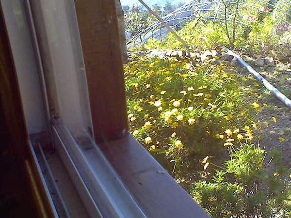 房間窗戶照出