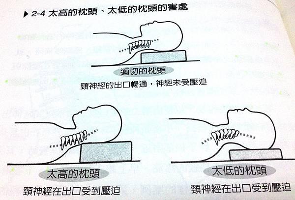 枕高對頸部的影響
