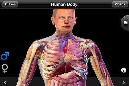 HUMAN ALTAS-1