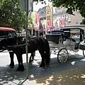 街邊的馬車,可以付費繞市區一週喔