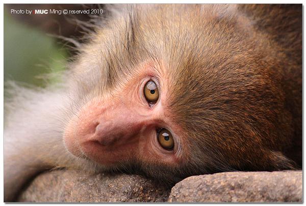 泰源幽谷登仙橋拍猴子