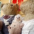 豆豆與泰迪熊