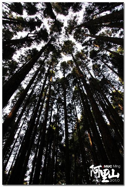 茂密的樹林
