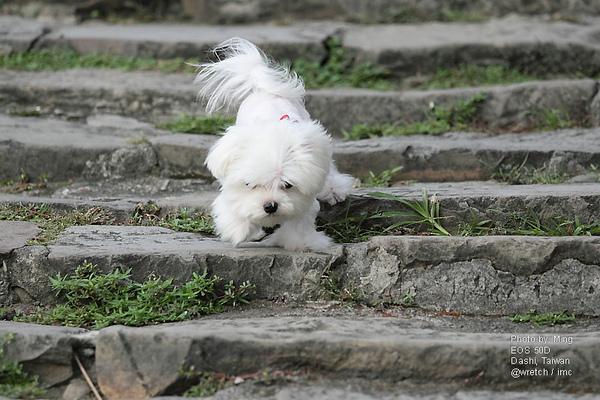 樂樂學下樓梯