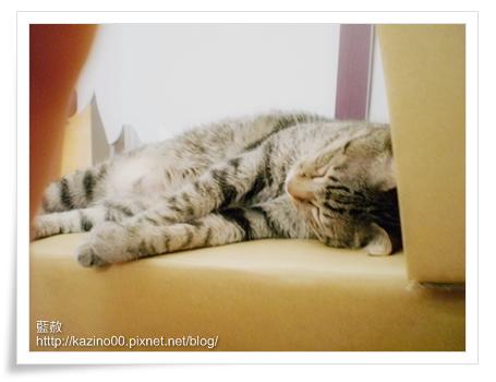 小虎睡得很熟