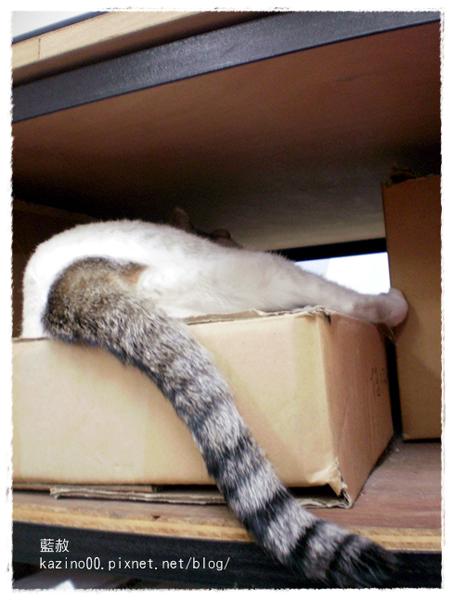 防空洞之神貓見尾不見首!