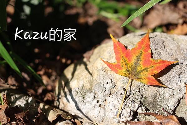 2015-09-25-22-19-35_deco.jpg