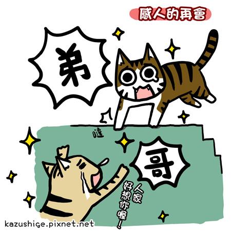 街頭巷尾貓9-2.jpg