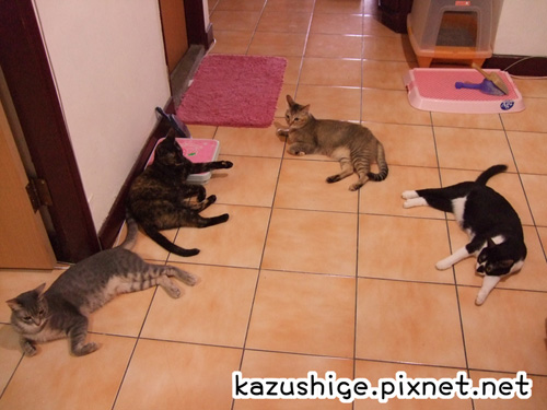 貓奴26-4.jpg