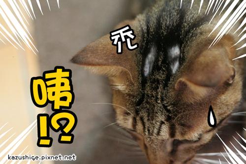 貓奴29-6