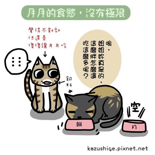 貓奴39-1