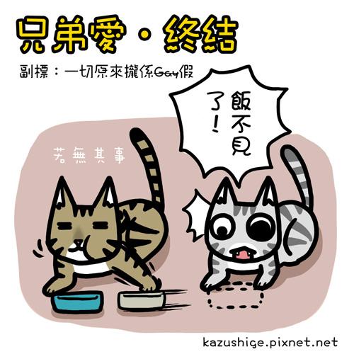 貓奴39-3