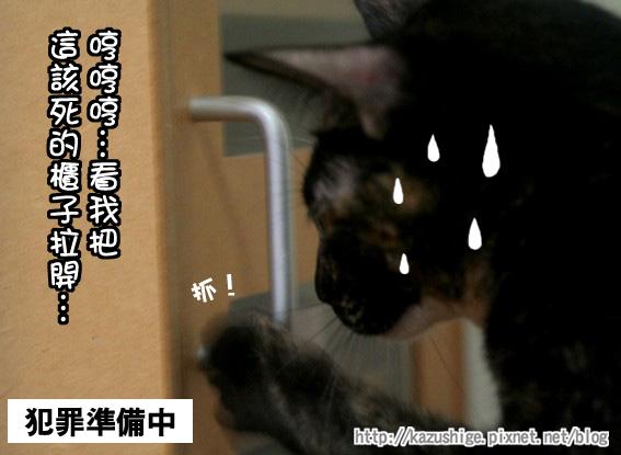 貓奴16-4.jpg