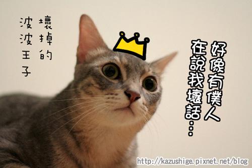 貓奴22-7.jpg