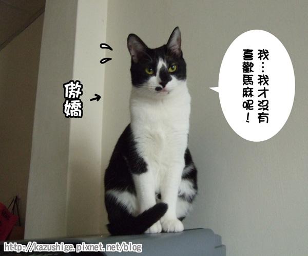 貓奴10-6.jpg