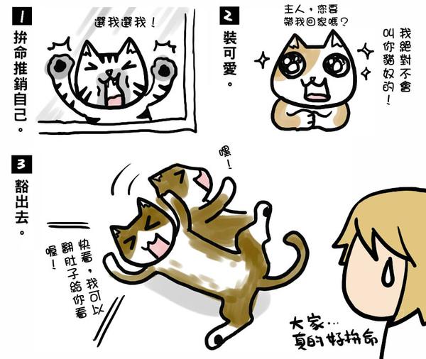 貓奴2.jpg