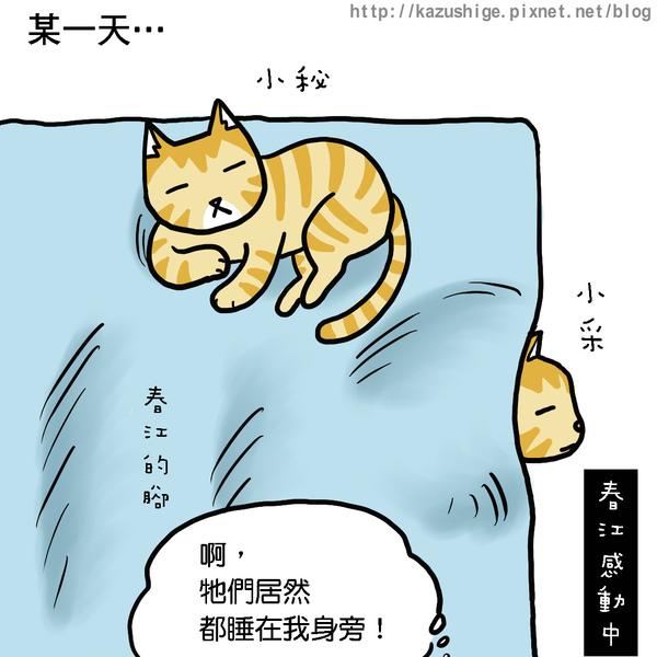 貓奴11-1.jpg