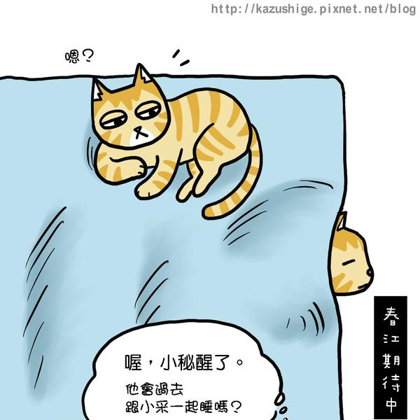 貓奴11-2.jpg