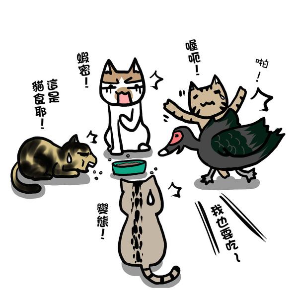 街頭巷尾貓1-2.jpg