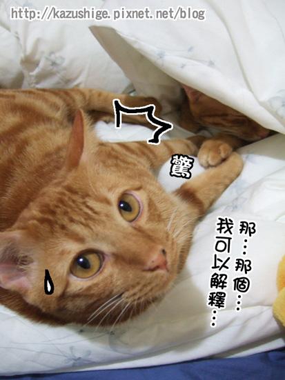 貓奴11-7.jpg