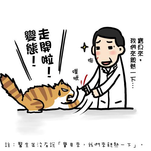 街頭巷尾貓7-1.jpg