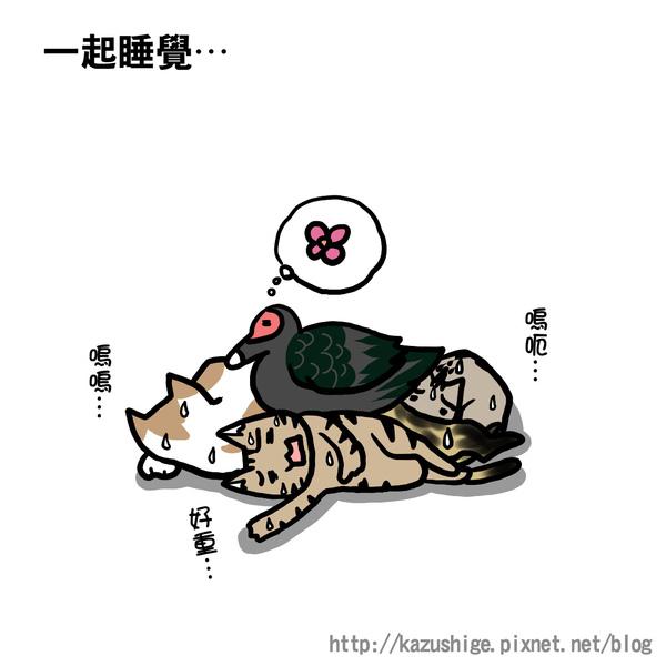 街頭巷尾貓1-4.jpg