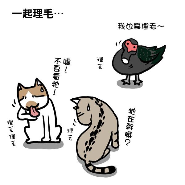 街頭巷尾貓1-3.jpg