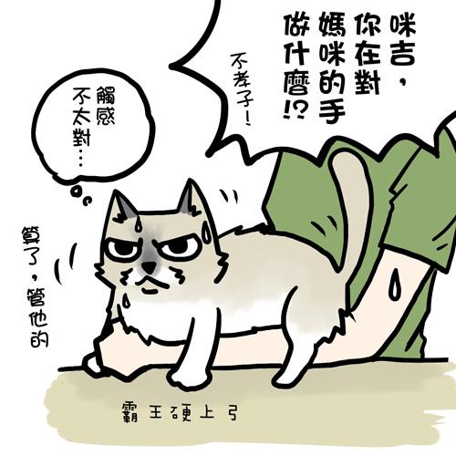 街頭巷尾貓8-1.jpg