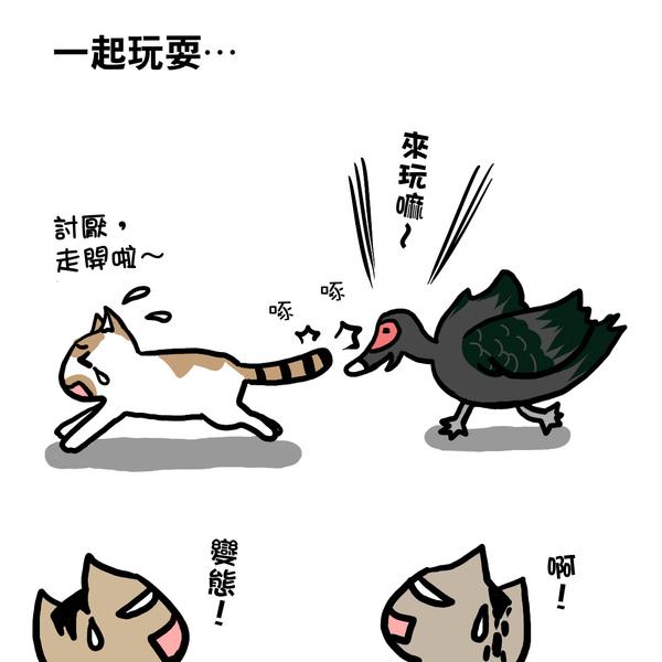 街頭巷尾貓1-5.jpg