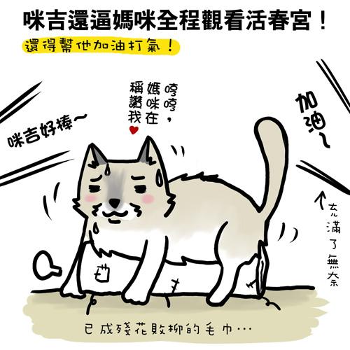 街頭巷尾貓8-3.jpg