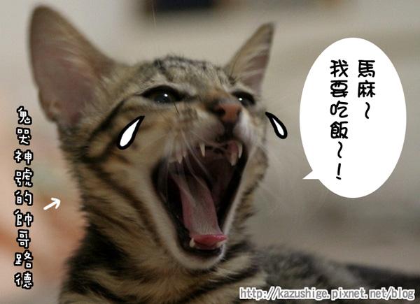 貓奴9-5.jpg