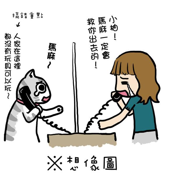 街頭巷尾貓2-3.jpg