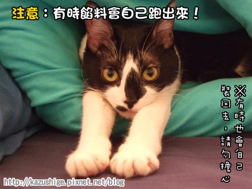 貓咪三明治4.jpg
